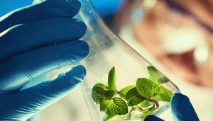 زیست فناوری و اقتصاد دانش بنیان