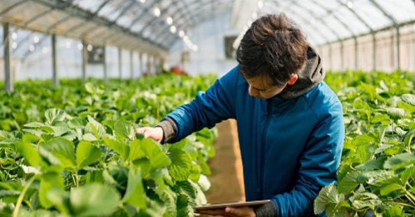شرکت های دانش بنیان حوزه کشاورزی